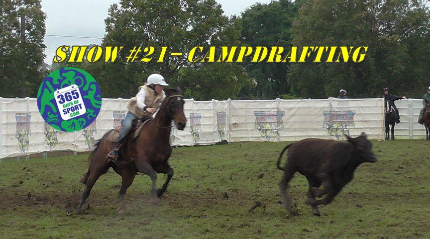 Sport #21/365 – CAMPDRAFTING – 14.11.15