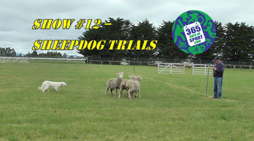 Show #12/365 – SHEEP DOG TRIALS – 4.11.15