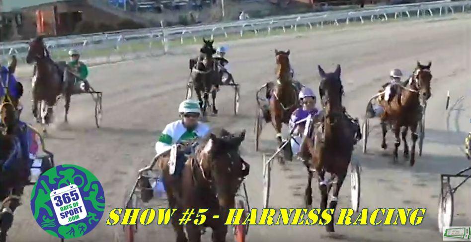 Show #5/365 – HARNESS RACING – 29.10.15